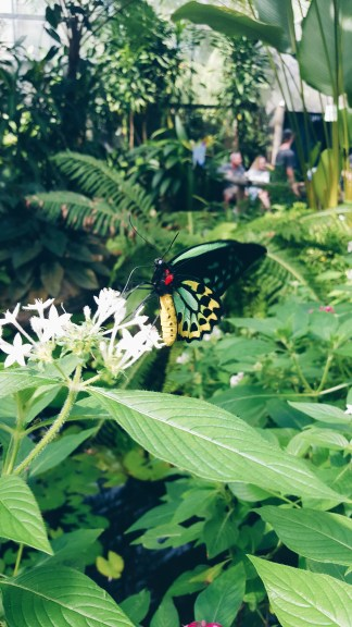 Kuranda butterfly sanctuary