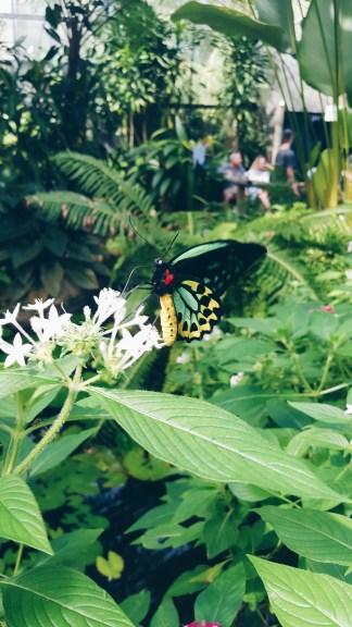 Kuranda butterfly sanctuary